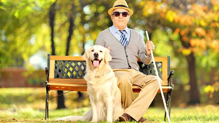 ability; adult; animal; autumn; bench; blind; blindness; break; cane; canine; cap; caucasian; cheerful; comfortable; concept; confident; creature; daytime; disability; disabled; dog; elderly; eyewear; friendship; gentleman; glasses; handicapped; happy; hat; invalid; labrador; male; man; mature; natural; outdoor; outside; park; person; pet; pose; purebred; resting; retriever; senior; sit; smile; stick; vegetation;