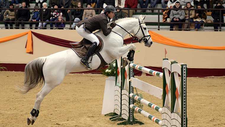 action; animal; athlete; bridle; brown; champion; compete; competition; dressage; equestrian; equine; equitation; event; fence; field; horse; horseback; horseman; hungary; hurdle; indoor; jockey; jump; jumper; kaposvar; man; master; obstacle; power; powerful; racing; recreation; ride; rider; saddle; show; showjumping; sport; sportsman; stallion; tournament; world;