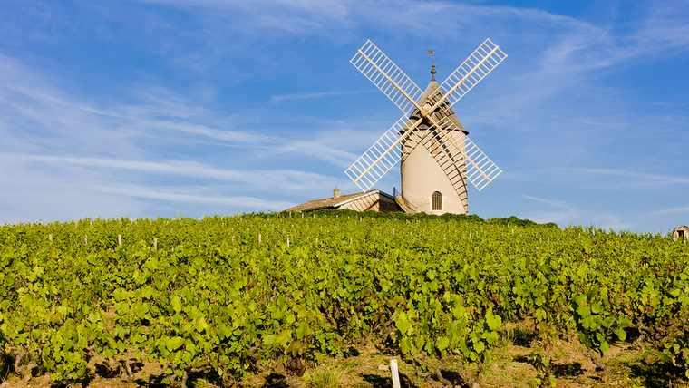 agriculture; bourgogne; france; rhone; rural; viniculture;